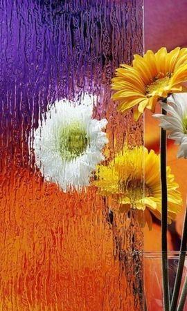 44591 télécharger le fond d'écran Plantes, Fleurs - économiseurs d'écran et images gratuitement