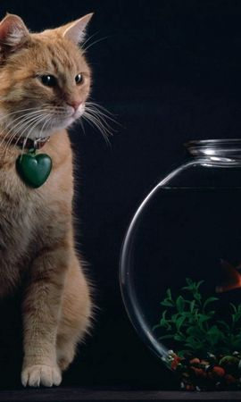 154771 download wallpaper Animals, Cat, Aquarium, Suspension, Heart, Fishes screensavers and pictures for free