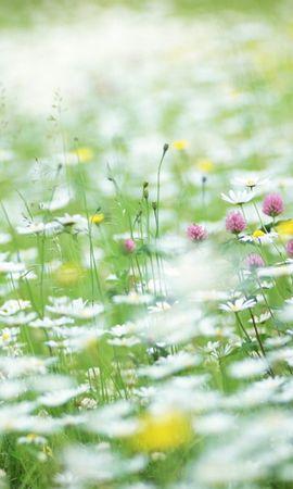5667 скачать обои Растения, Цветы - заставки и картинки бесплатно