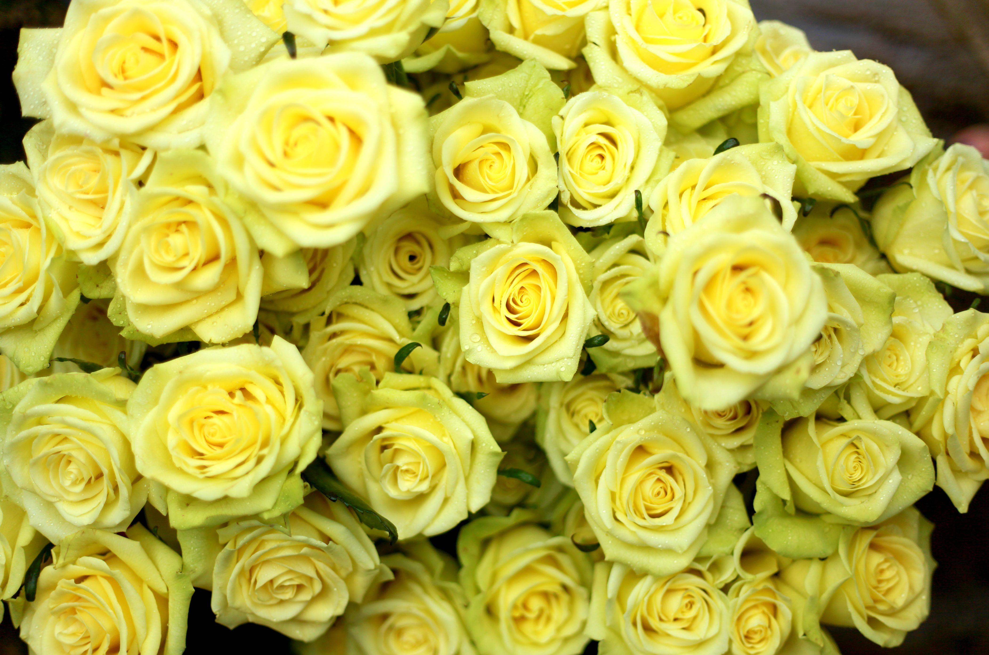 147748 скачать Желтые обои на телефон бесплатно, Цветы, Розы, Капли, Букет, Мокрые Желтые картинки и заставки на мобильный