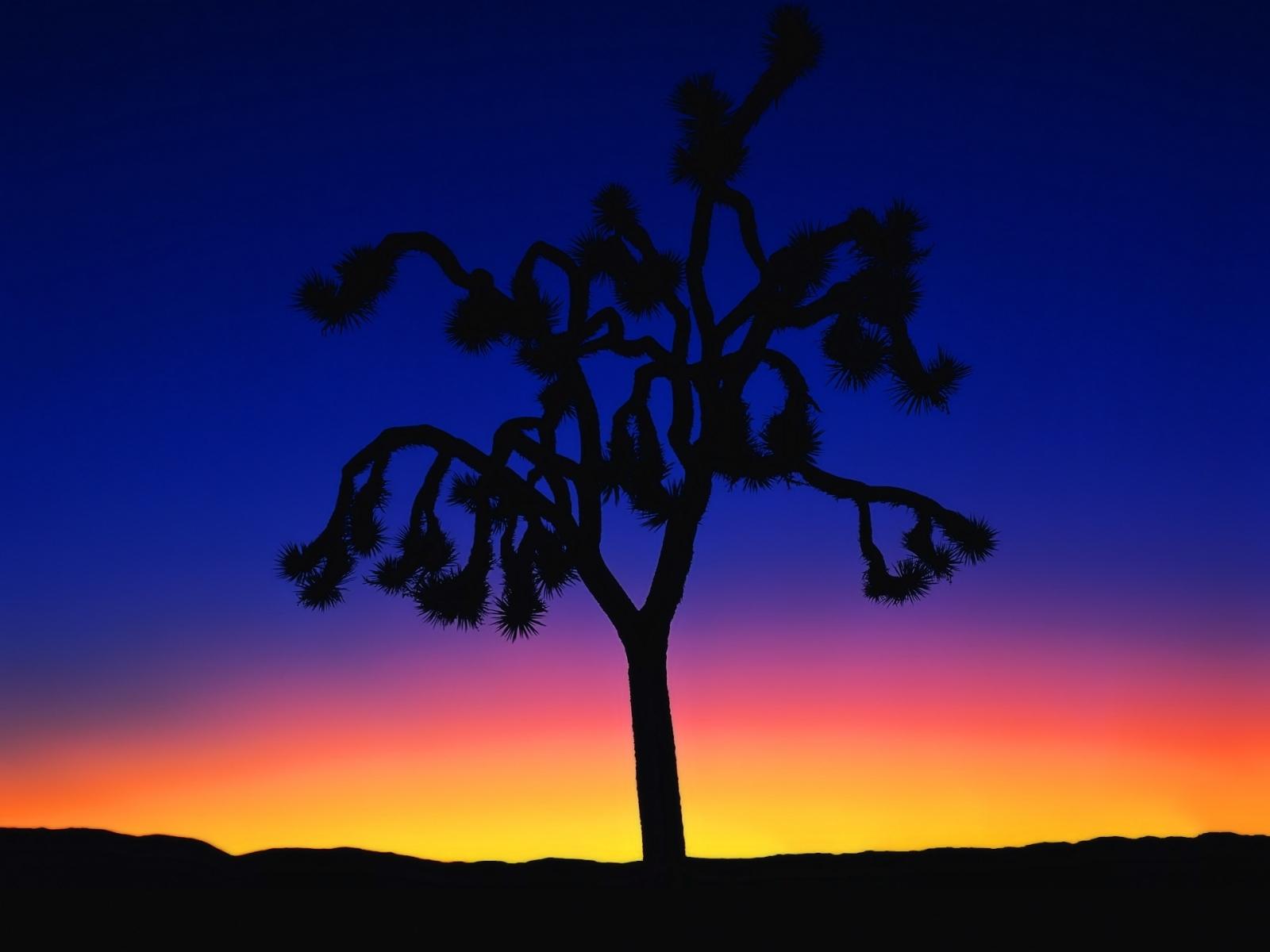 5012 скачать обои Пейзаж, Деревья - заставки и картинки бесплатно