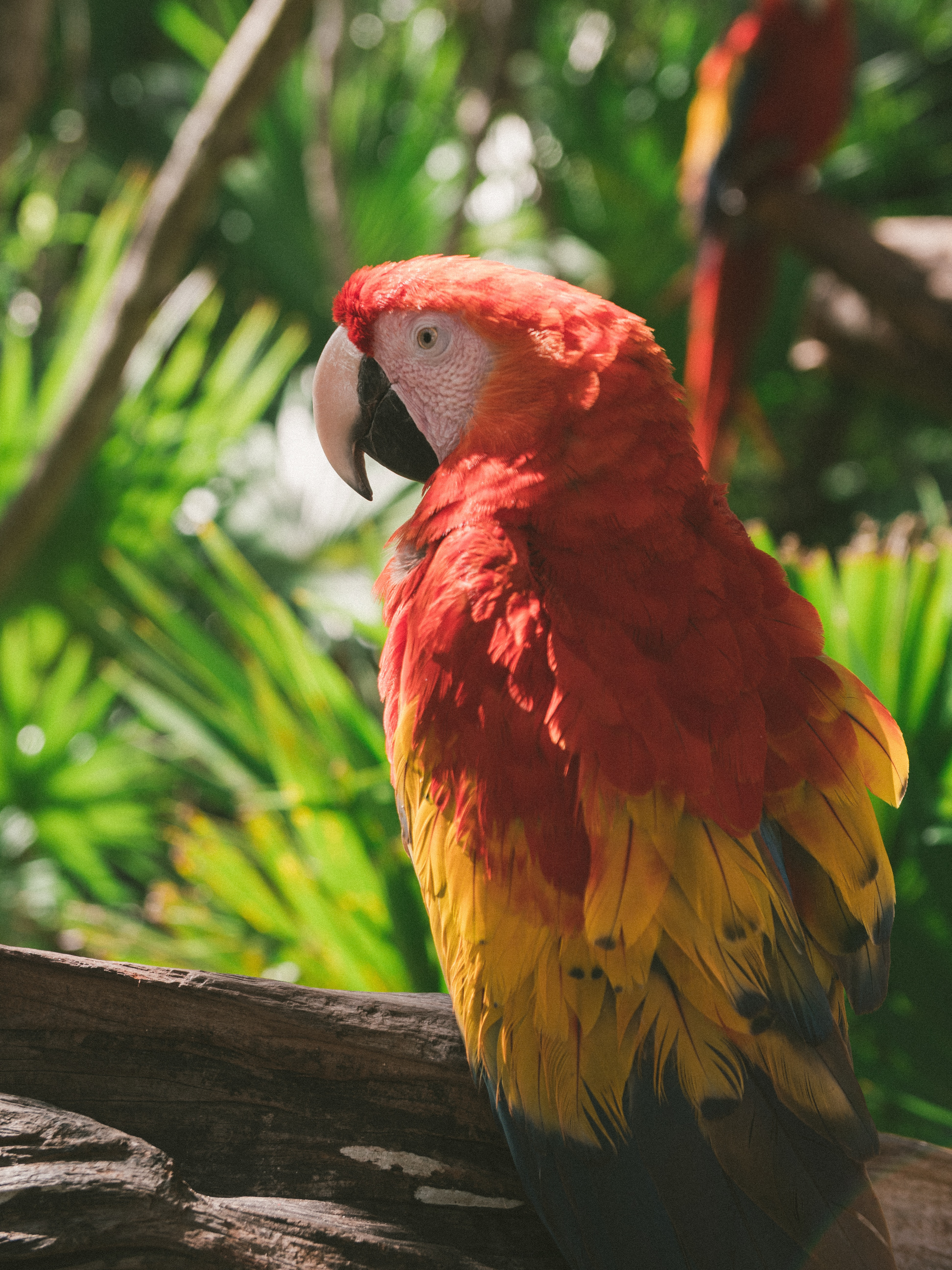60173 download wallpaper Animals, Macaw, Parrots, Multicolored, Motley, Bird screensavers and pictures for free