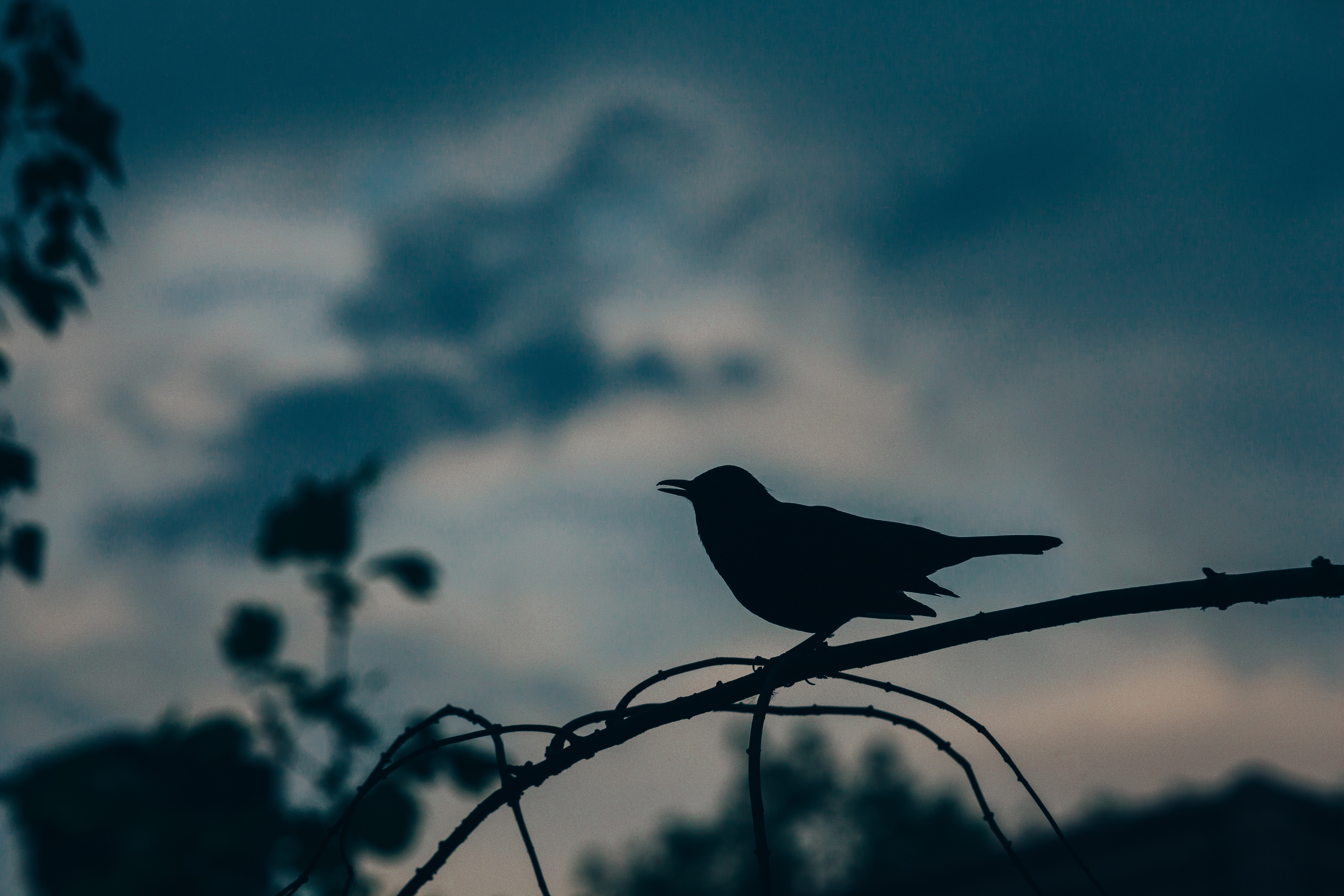 75334 Screensavers and Wallpapers Bird for phone. Download Dark, Silhouette, Bird, Branch pictures for free