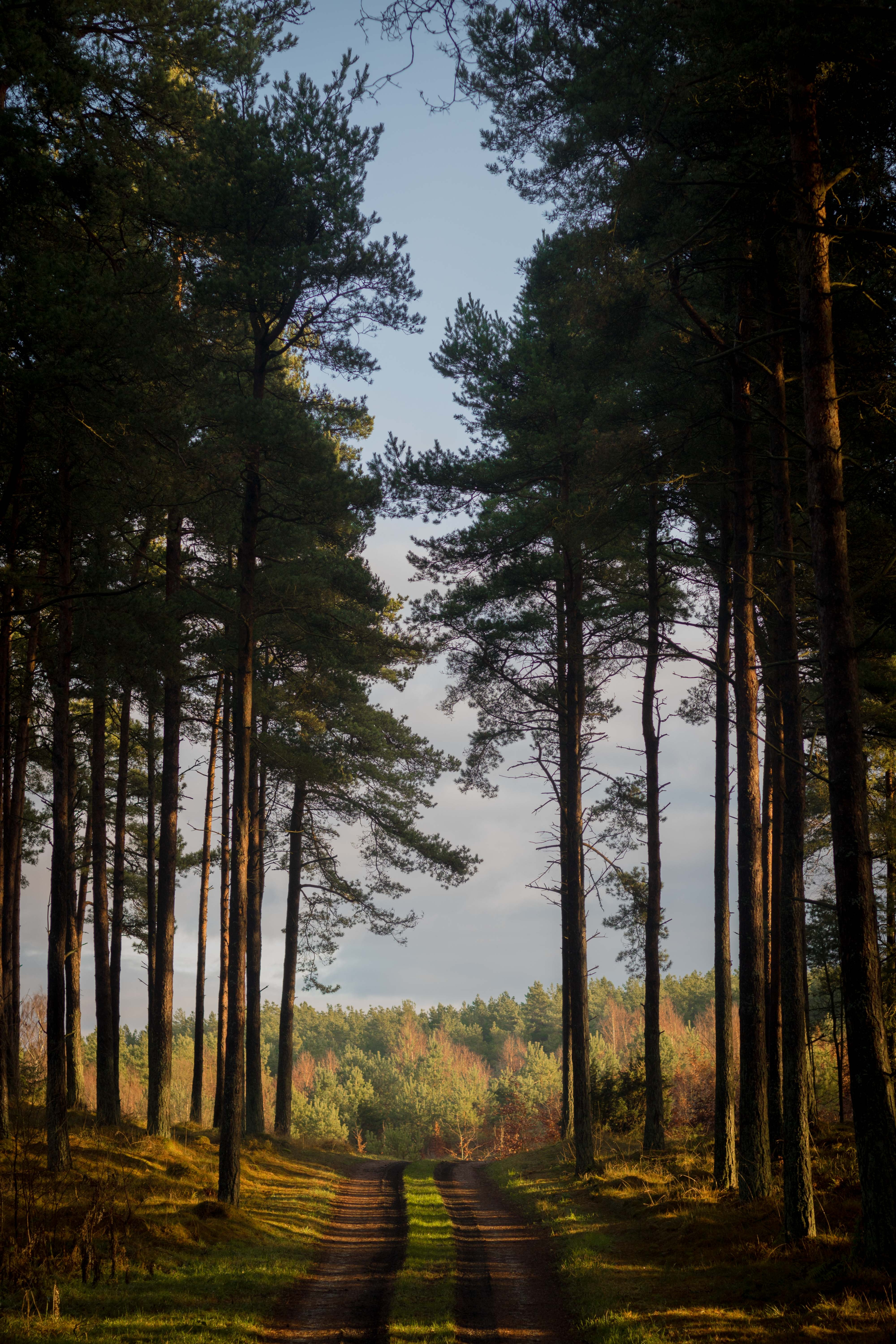 114582 Screensavers and Wallpapers Summer for phone. Download Nature, Trees, Summer, Forest, Path, Denmark pictures for free
