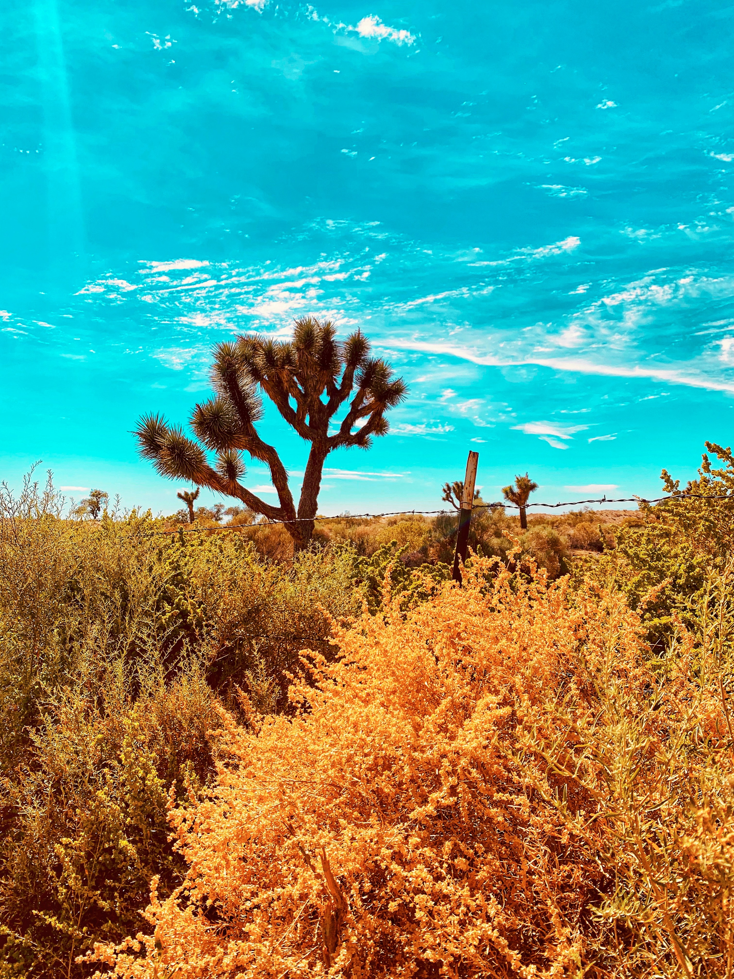 76485 download wallpaper Plants, Nature, Cactuses, Desert, Bush, Wildlife screensavers and pictures for free
