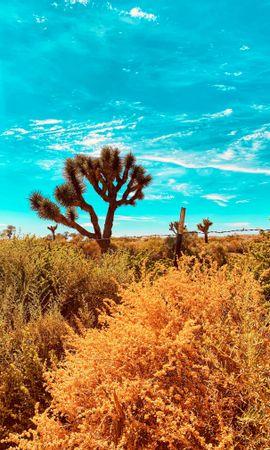 76485 descargar fondo de pantalla Naturaleza, Plantas, Fauna Silvestre, Vida Silvestre, Arbusto, Desierto, Cactus: protectores de pantalla e imágenes gratis