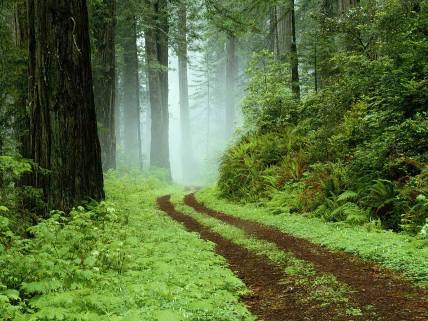 23512 скачать обои Пейзаж, Деревья, Дороги, Кусты - заставки и картинки бесплатно