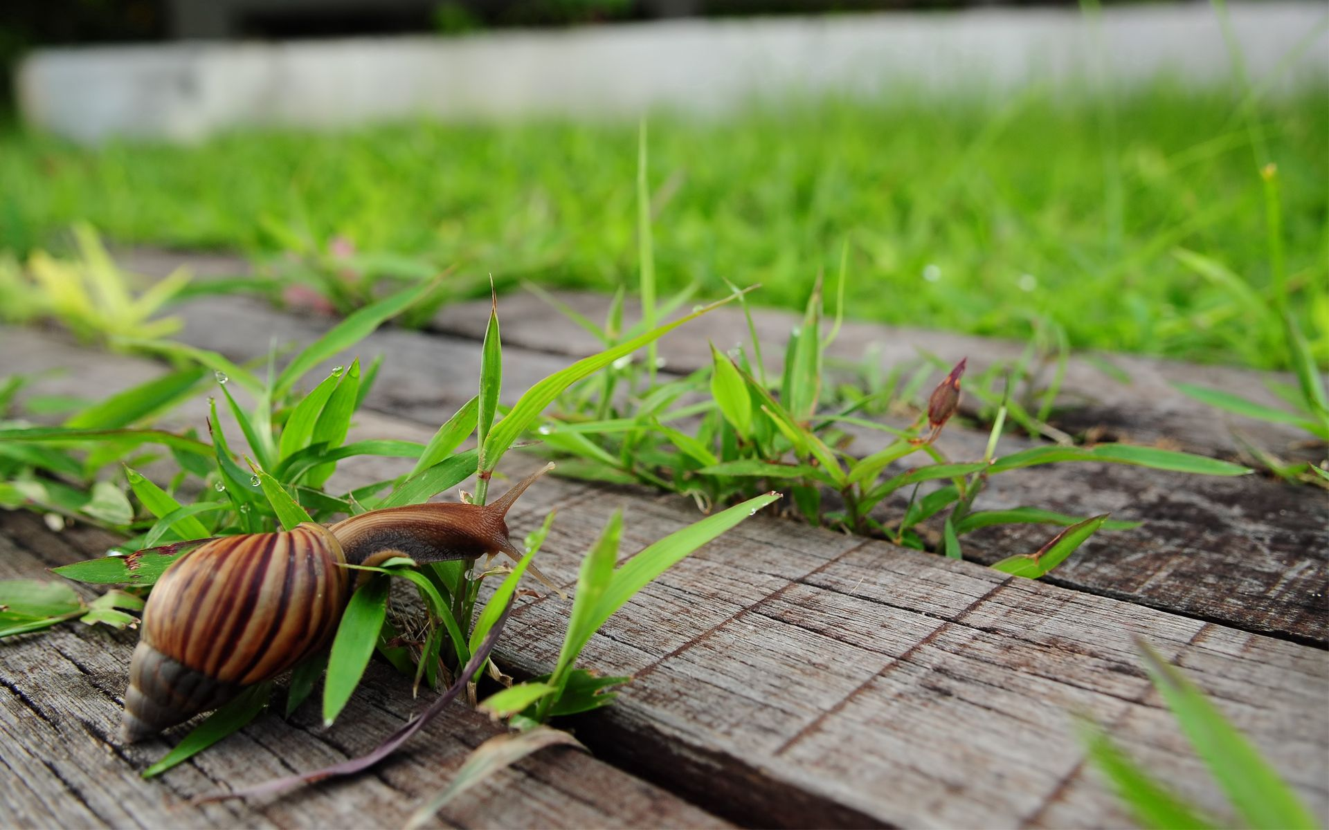 131706 download wallpaper Animals, Snail, Grass, Wood, Wooden, Crawl screensavers and pictures for free