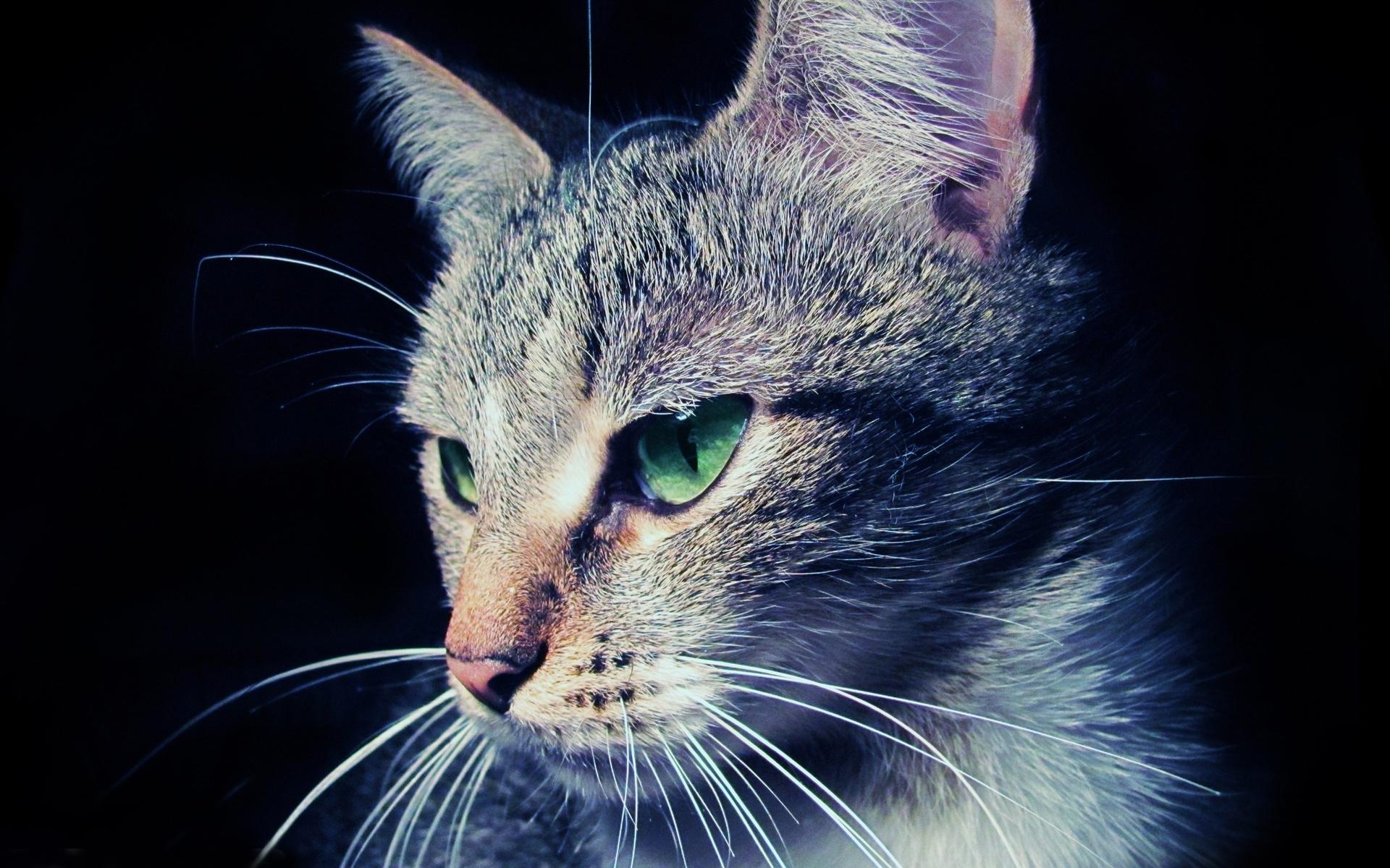 24203 скачать обои Животные, Кошки (Коты, Котики) - заставки и картинки бесплатно