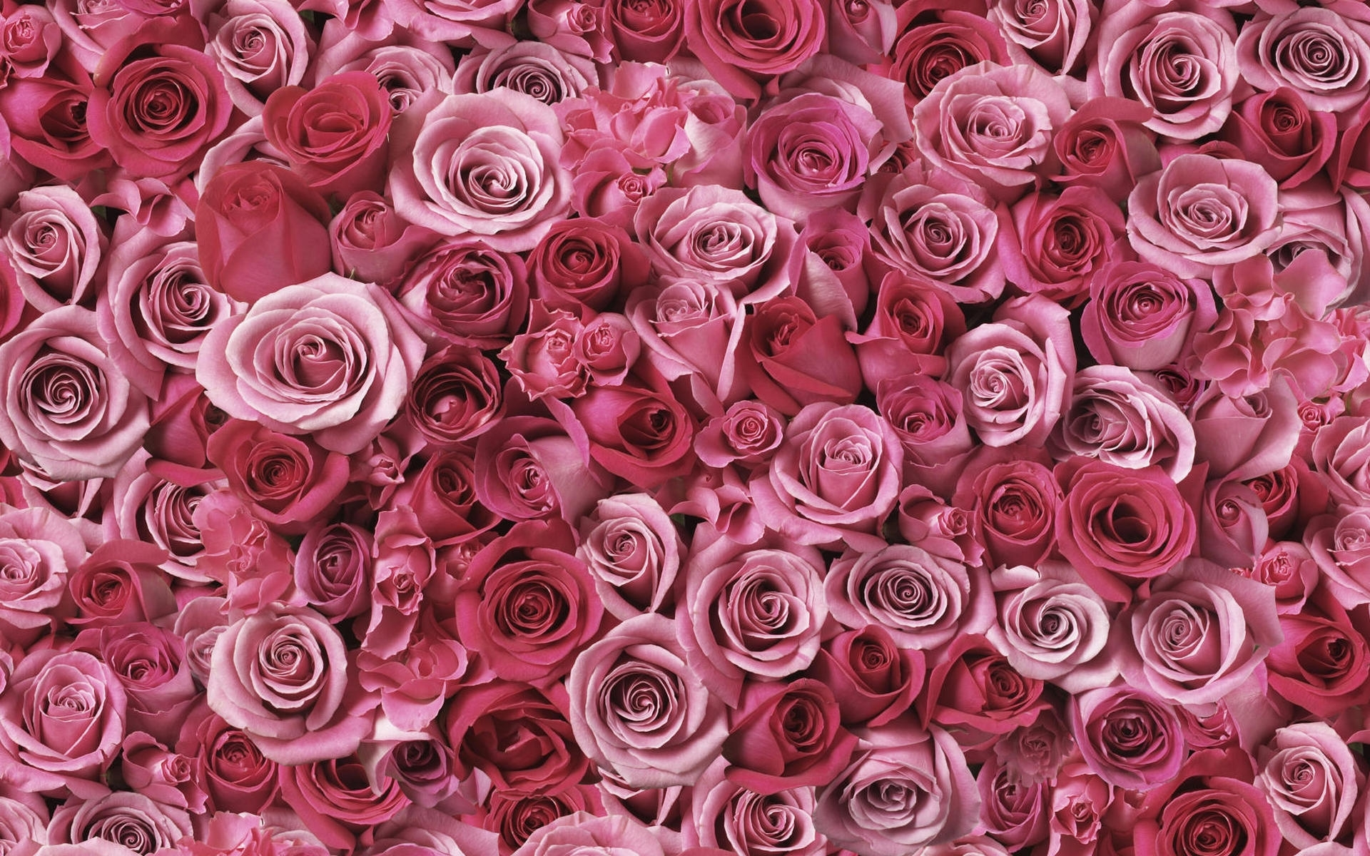 42482 скачать обои Растения, Цветы, Фон - заставки и картинки бесплатно