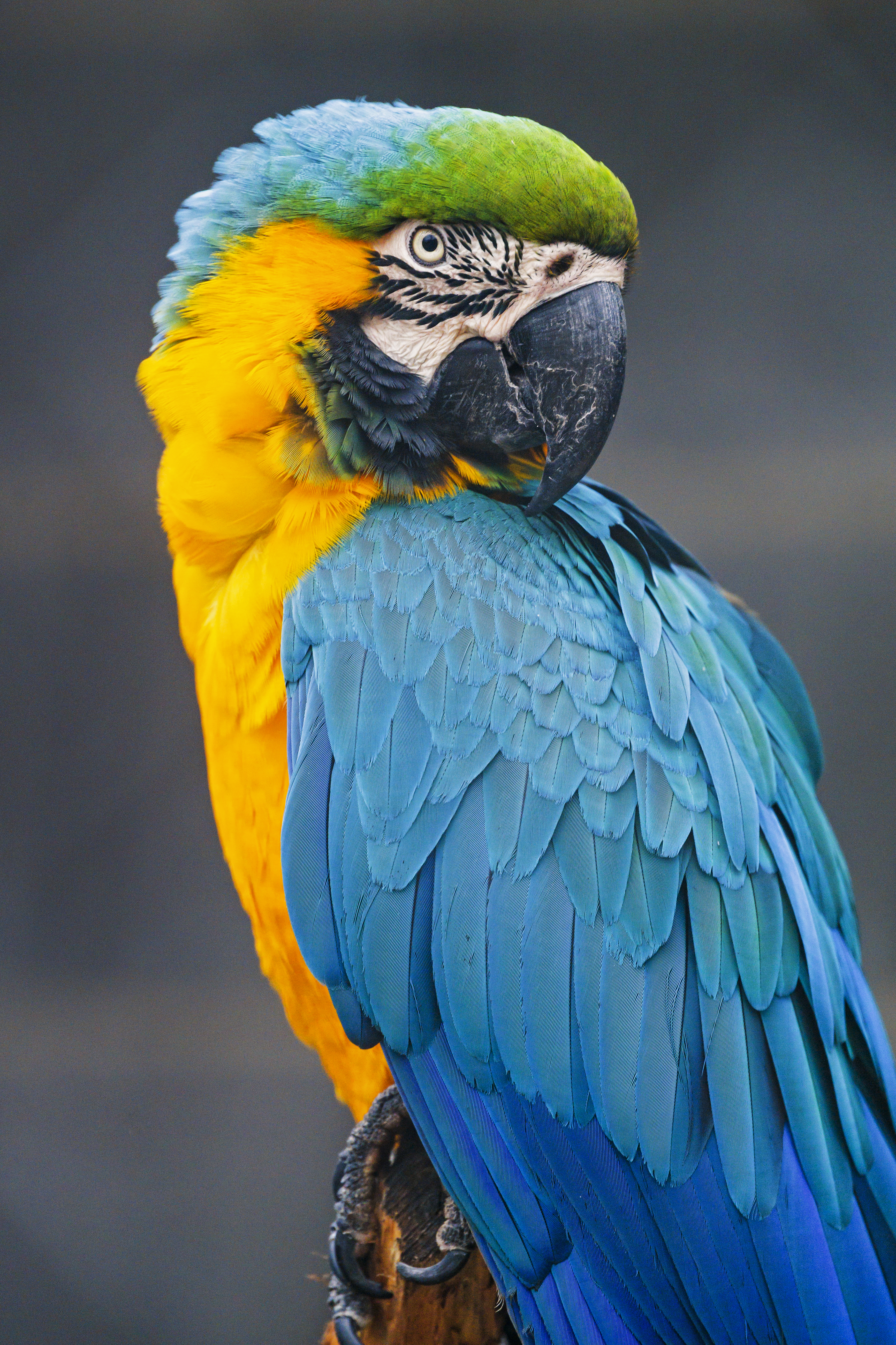 125793 download wallpaper Animals, Macaw, Parrots, Bird, Multicolored, Motley, Wild screensavers and pictures for free