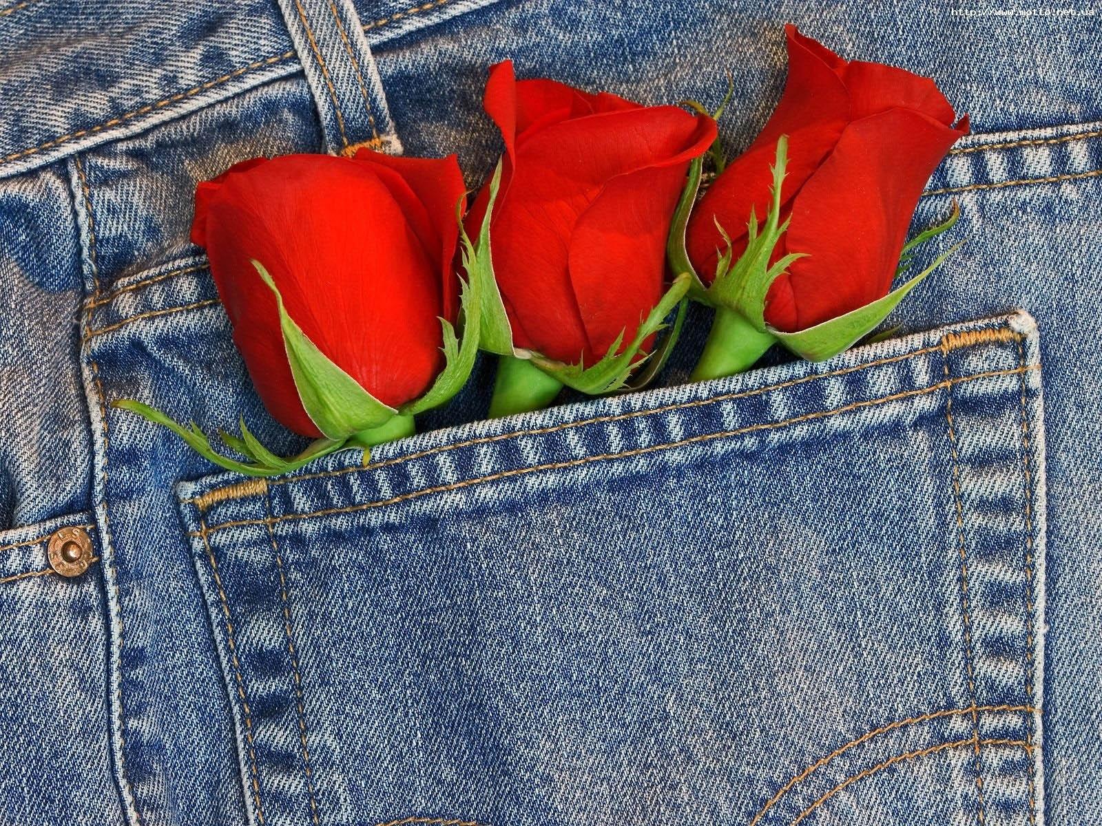 9171 скачать обои Растения, Цветы, Розы - заставки и картинки бесплатно