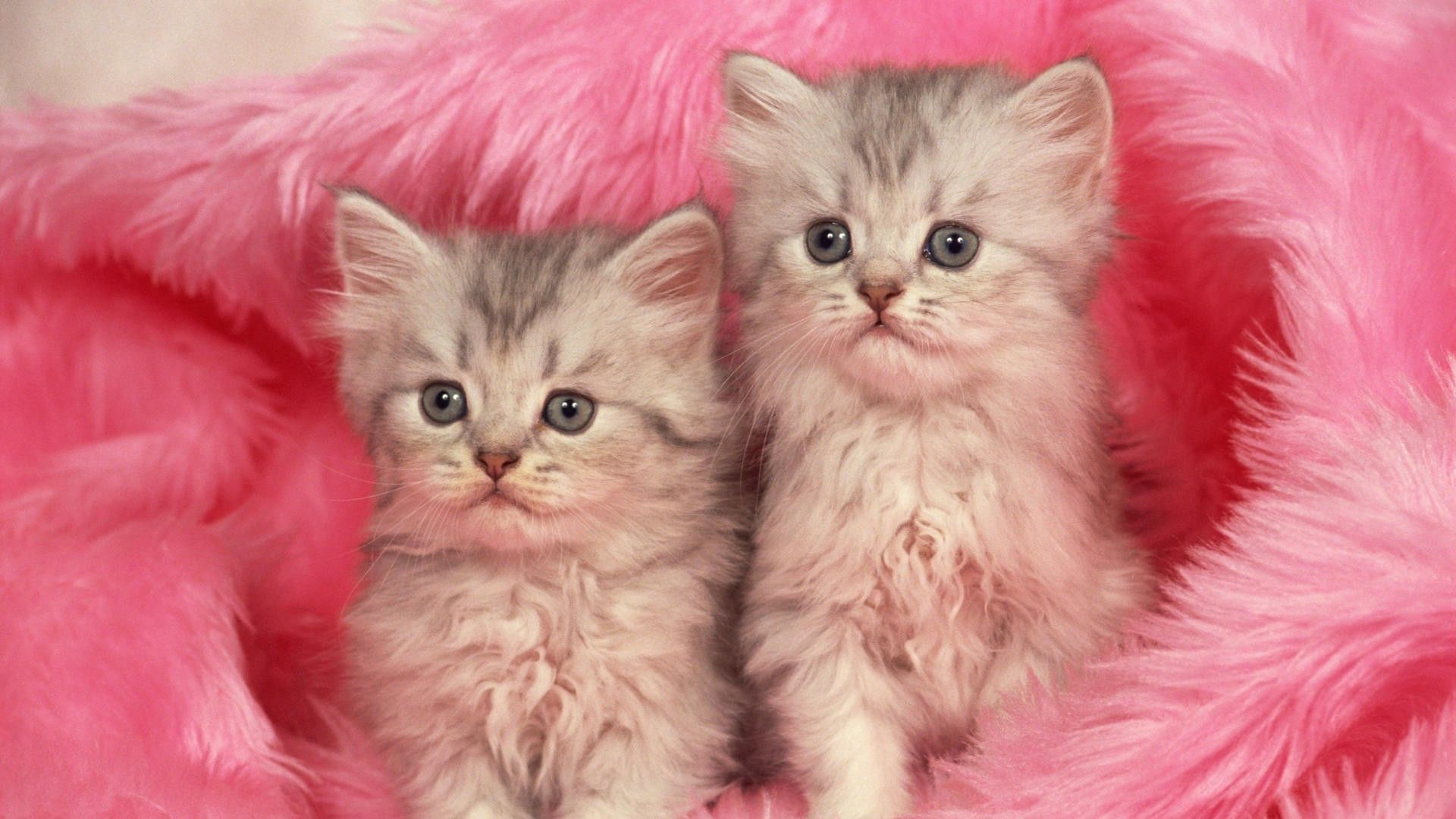 131270 Screensavers and Wallpapers Kittens for phone. Download Animals, Fluffy, Couple, Pair, Fur, Kittens pictures for free