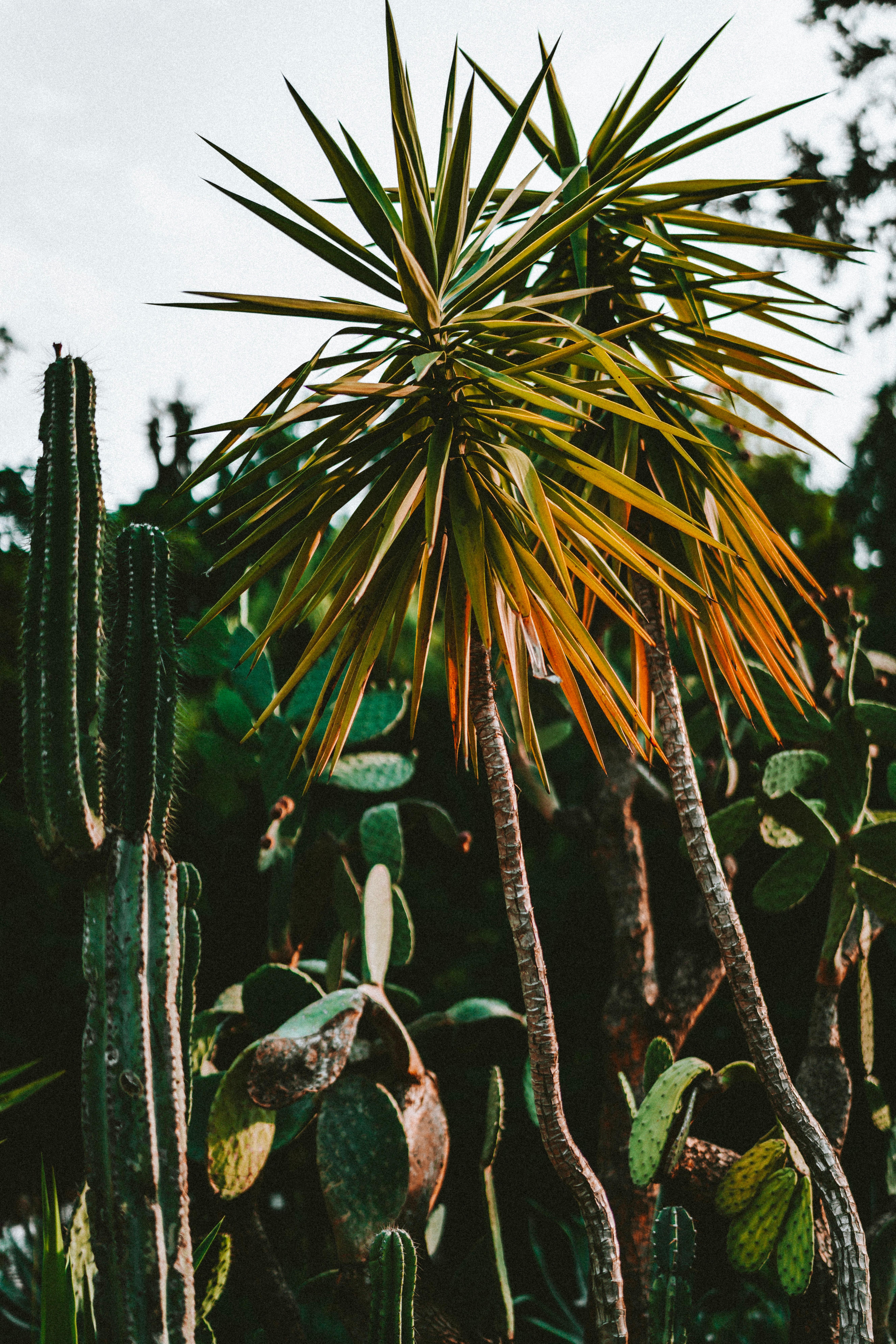 88020 Заставки и Обои Кактусы на телефон. Скачать Растения, Природа, Кактусы, Пальмы, Зеленый, Экзотический картинки бесплатно