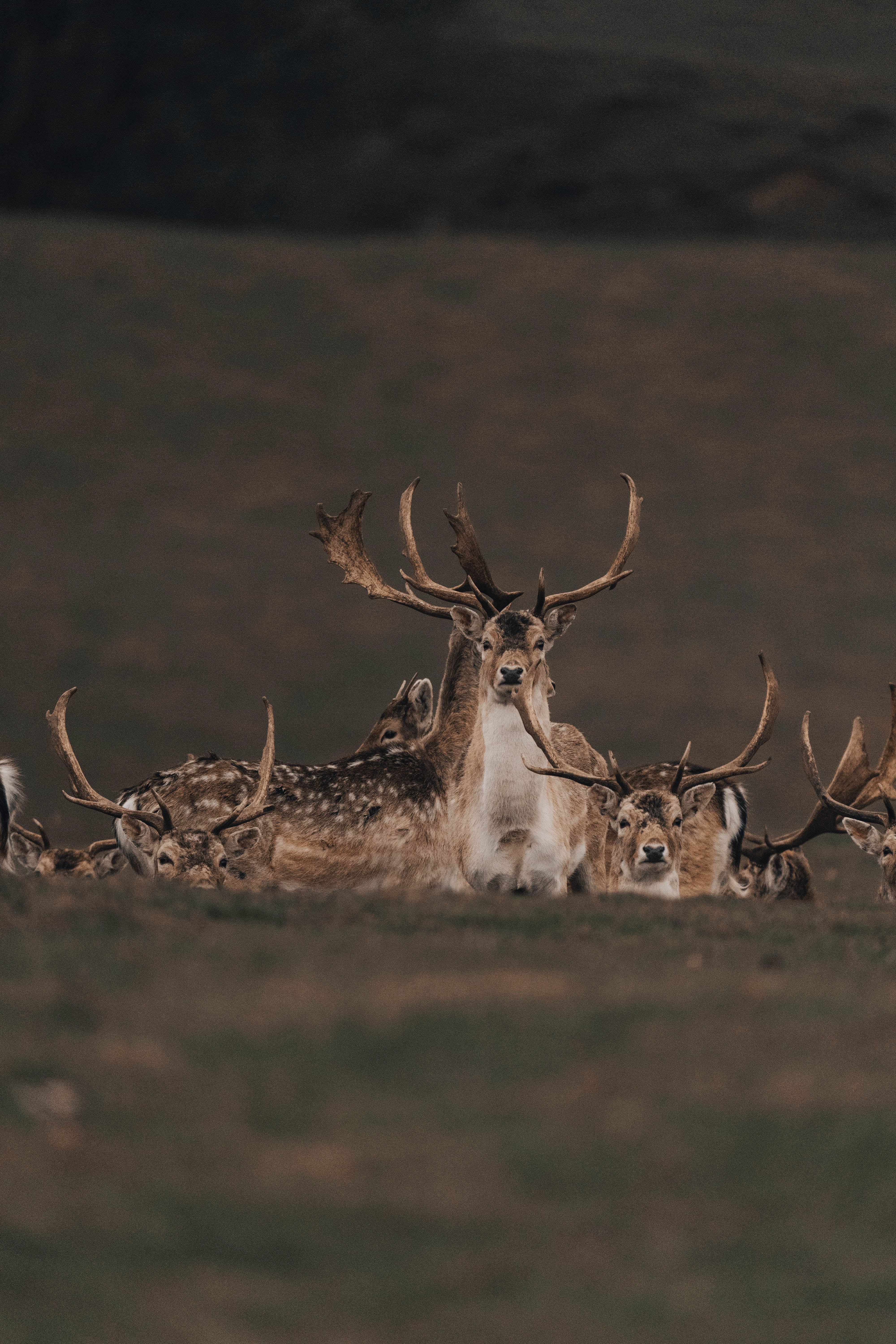 128372 download wallpaper Animals, Deers, Wildlife, Nature screensavers and pictures for free