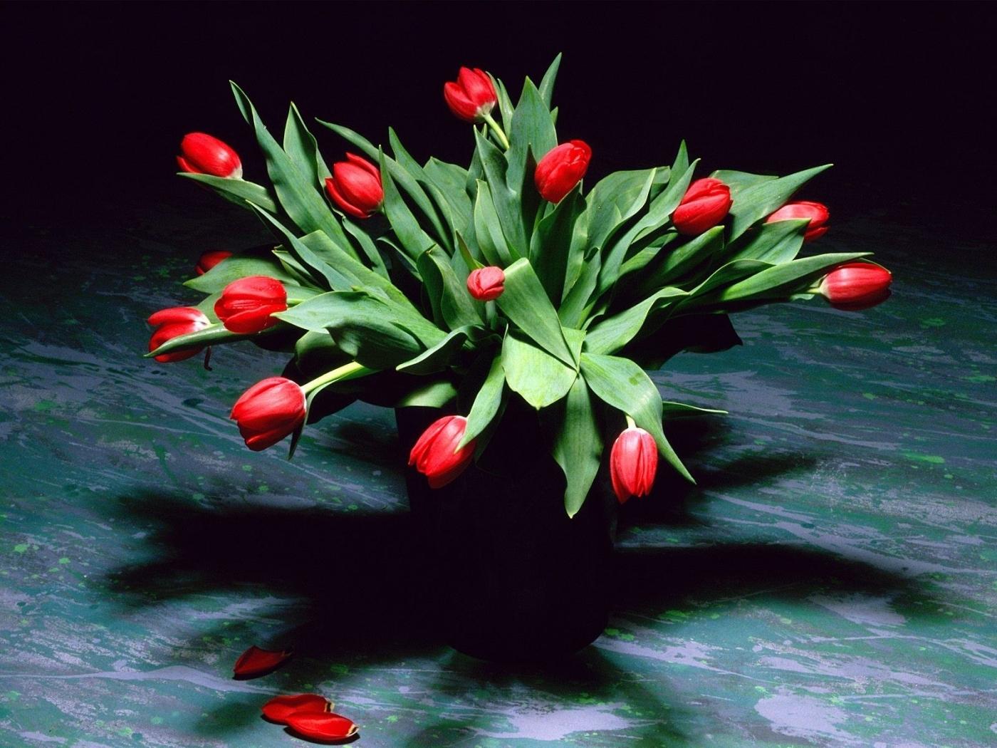 27630 скачать обои Растения, Цветы, Тюльпаны, Букеты - заставки и картинки бесплатно