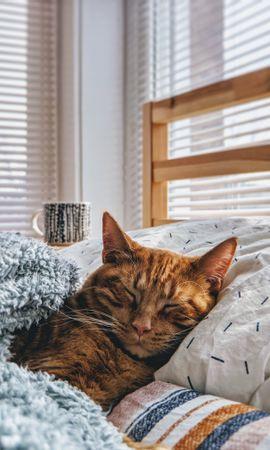 130759壁紙のダウンロード動物, ネコ, 猫, 睡眠, 夢, ベッド, 居心地のよさ, 安楽-スクリーンセーバーと写真を無料で