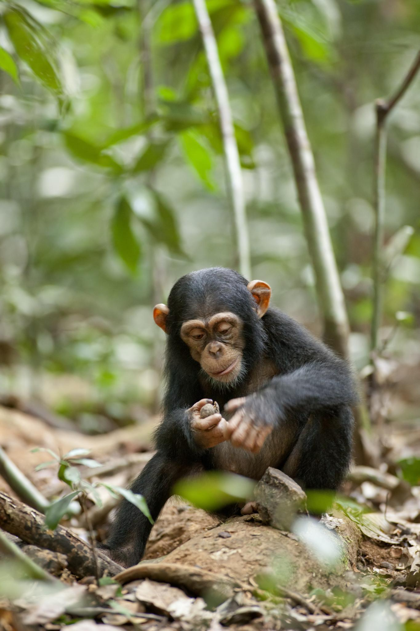 15320 Screensavers and Wallpapers Monkeys for phone. Download Animals, Monkeys pictures for free