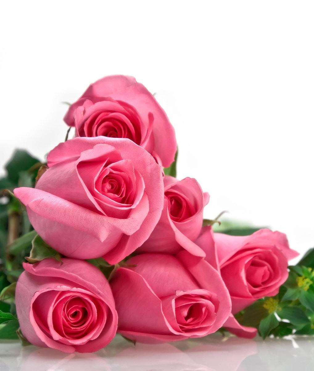 Handy-Wallpaper Feiertage, Pflanzen, Blumen, Roses, 8. März Internationaler Frauentag kostenlos herunterladen.