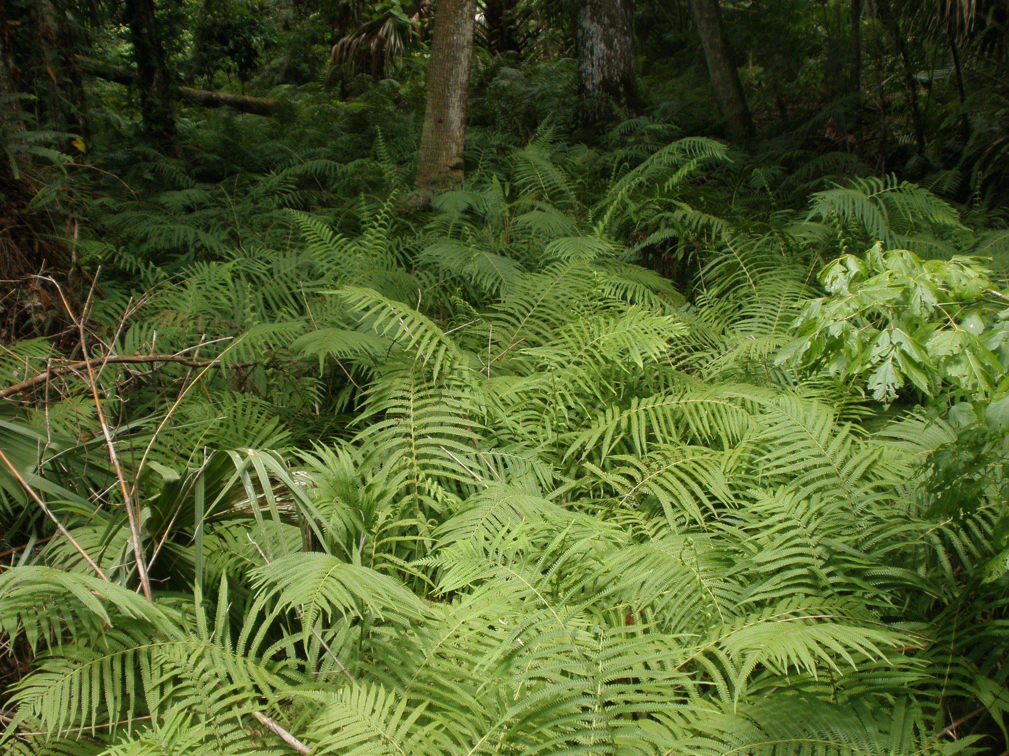 15005 Hintergrundbild herunterladen Pflanzen, Farne - Bildschirmschoner und Bilder kostenlos