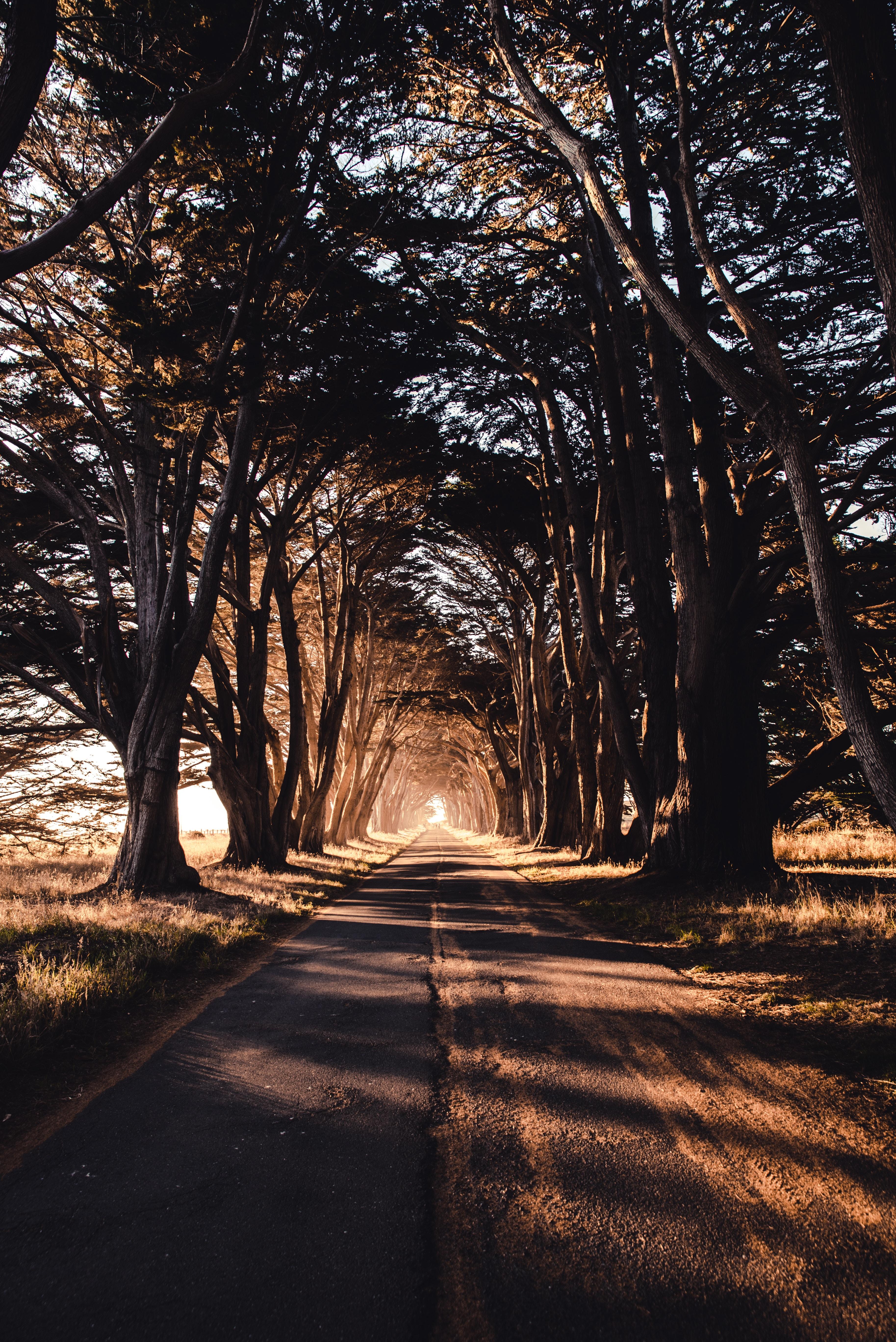 128689 завантажити шпалери Природа, Дерева, Дорога, Тінь - заставки і картинки безкоштовно