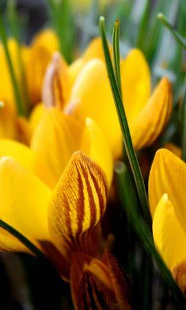 25602 скачать обои Растения, Цветы - заставки и картинки бесплатно