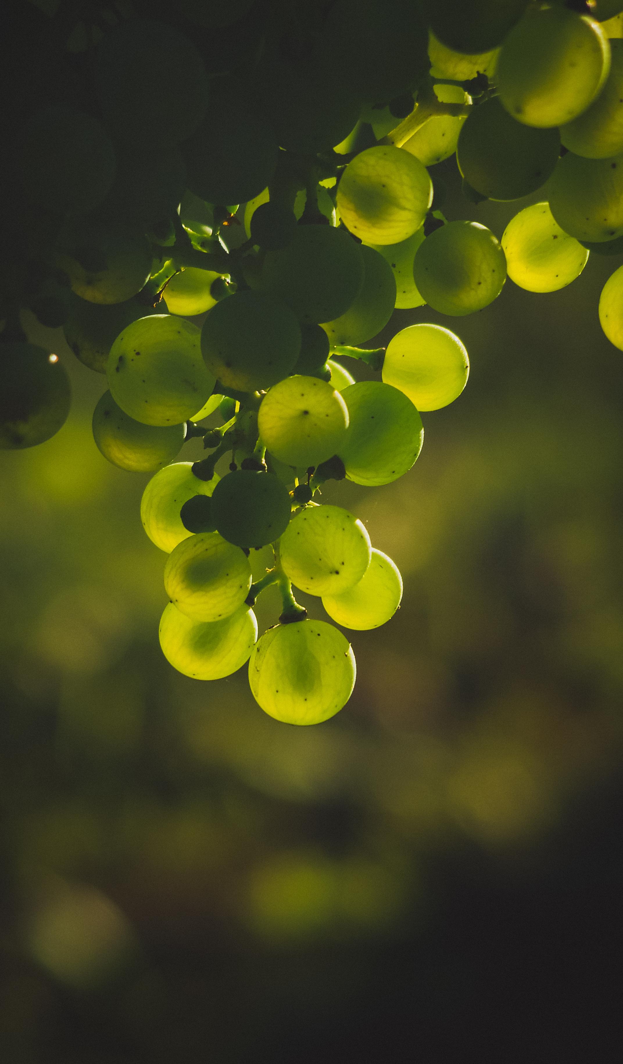 62154 скачать обои Виноград, Еда, Блики, Размытость, Зеленый, Гроздь - заставки и картинки бесплатно