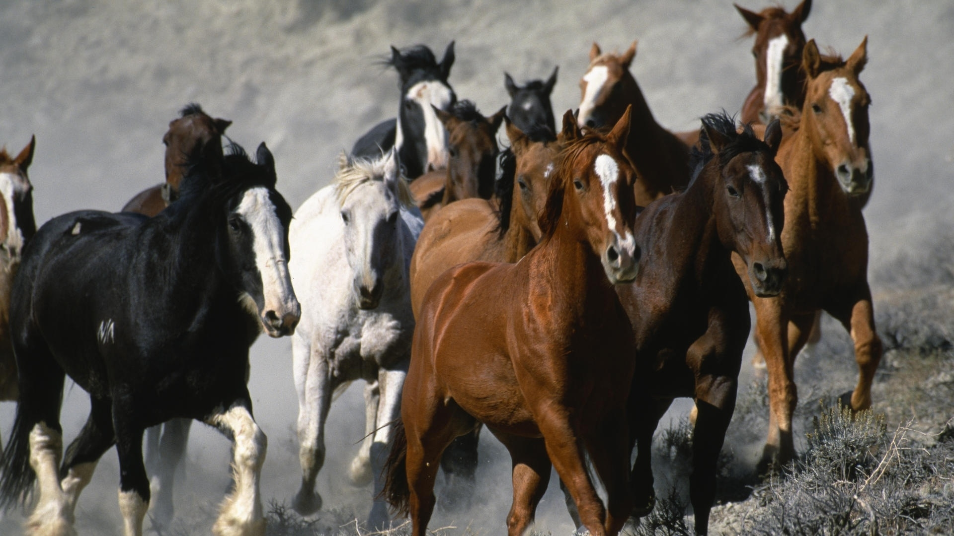 42234 download wallpaper Horses, Animals screensavers and pictures for free