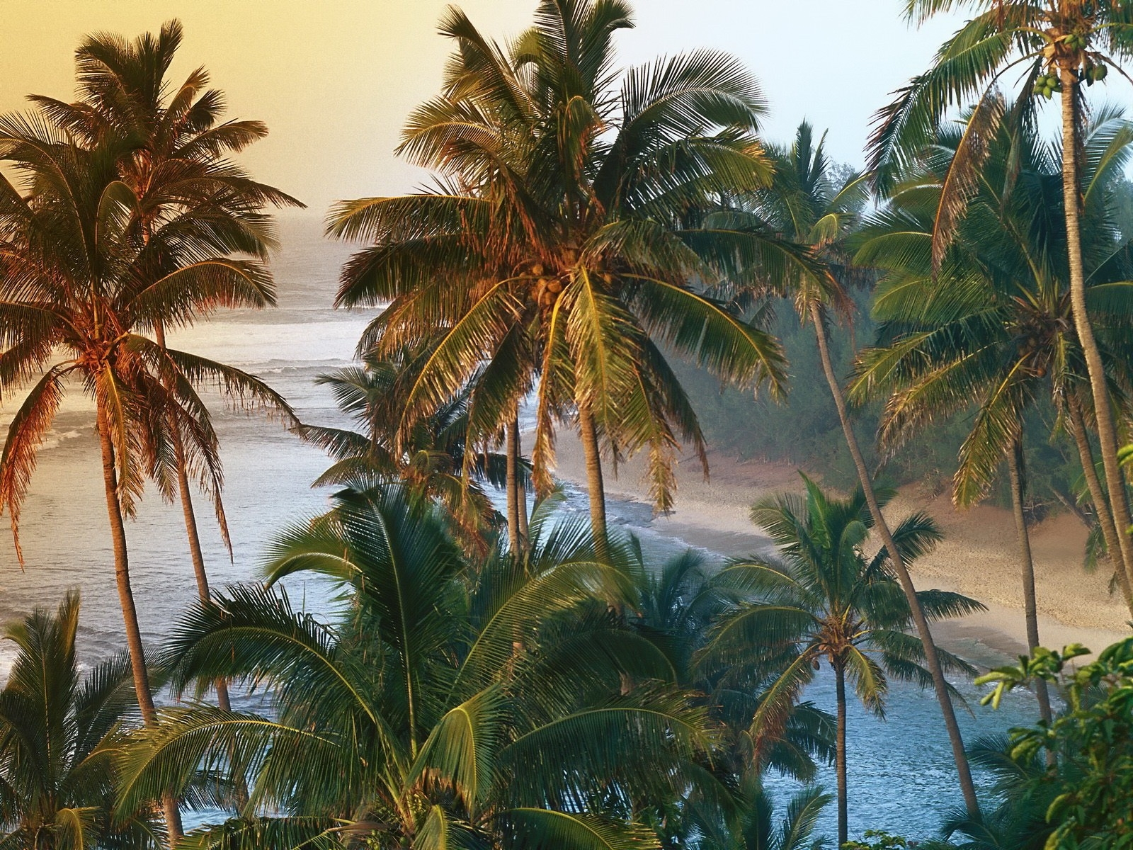 4280 download wallpaper Landscape, Trees, Palms screensavers and pictures for free