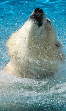 42720 baixar papel de parede Animais, Bears - protetores de tela e imagens gratuitamente