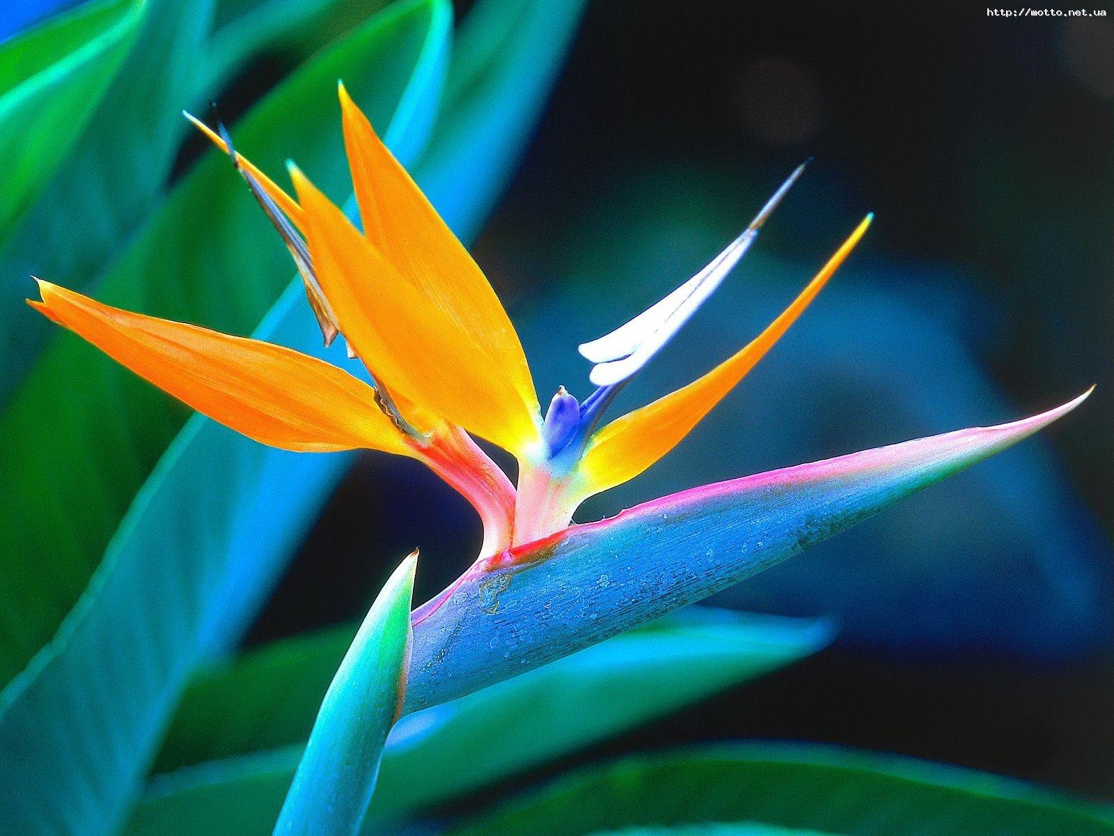 10575 descargar fondo de pantalla Plantas, Flores: protectores de pantalla e imágenes gratis