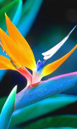 10575 скачать обои Растения, Цветы - заставки и картинки бесплатно