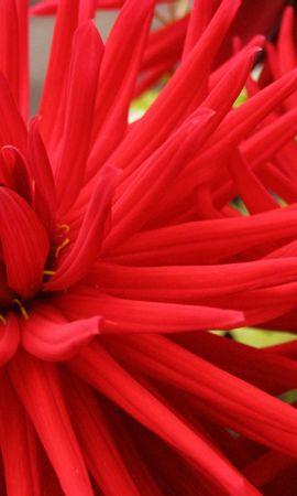 9879 скачать обои Растения, Цветы - заставки и картинки бесплатно