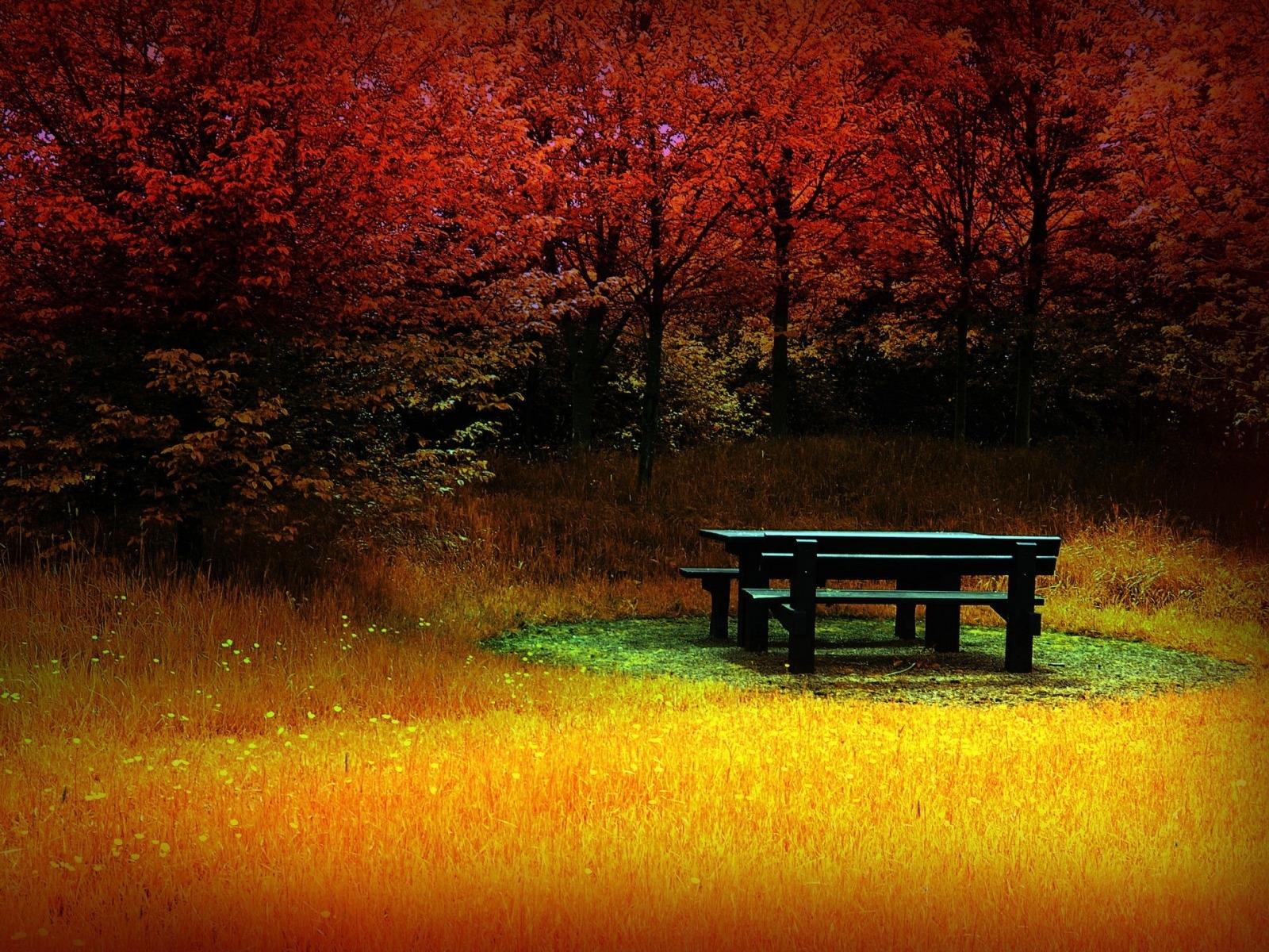 1528 Hintergrundbild herunterladen Landschaft, Bäume, Herbst, Fotokunst - Bildschirmschoner und Bilder kostenlos