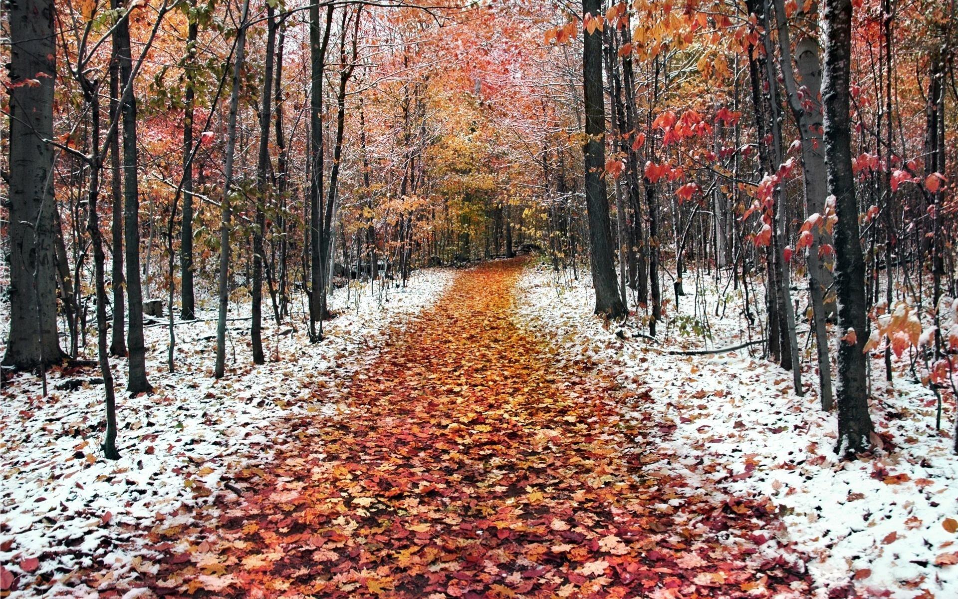 20690 скачать обои Пейзаж, Деревья, Дороги, Осень, Листья - заставки и картинки бесплатно