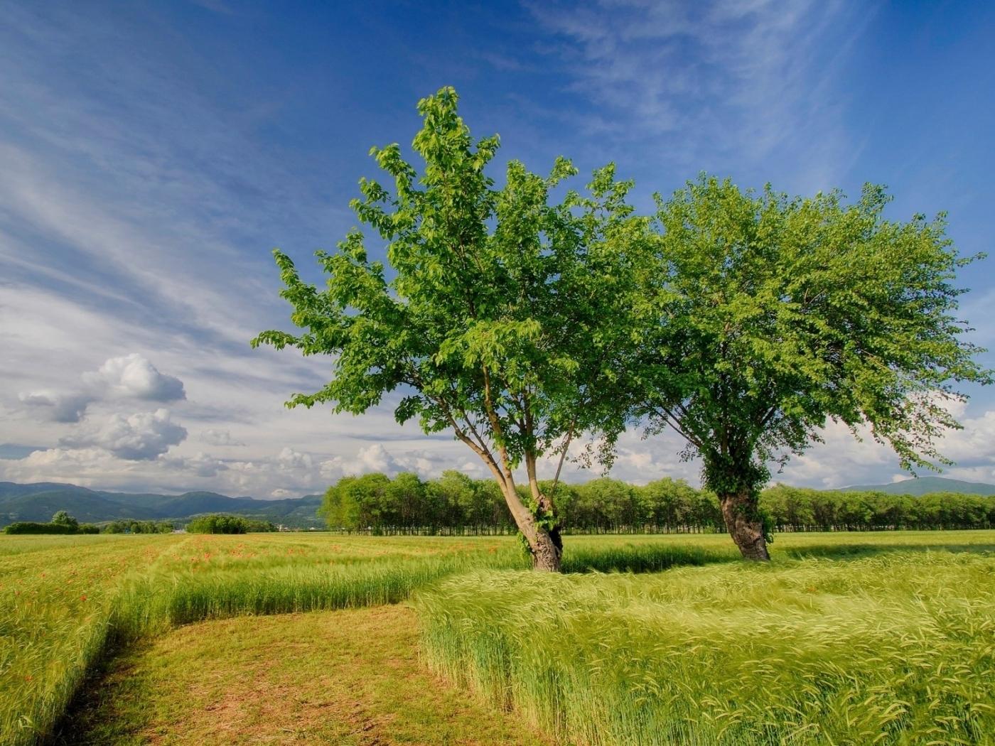 40795 скачать обои Пейзаж, Деревья, Поля - заставки и картинки бесплатно