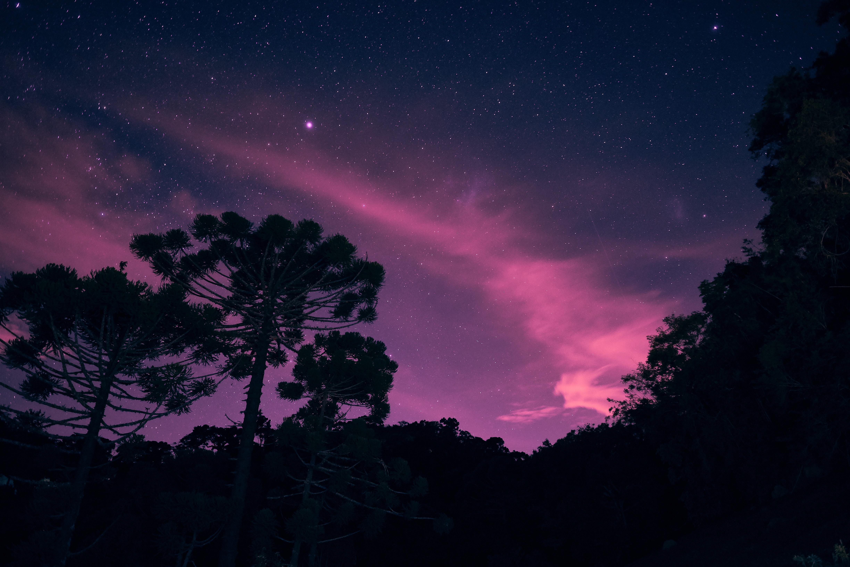 64110 Hintergrundbild herunterladen Natur, Bäume, Sterne, Übernachtung, Schein, Sternenhimmel - Bildschirmschoner und Bilder kostenlos