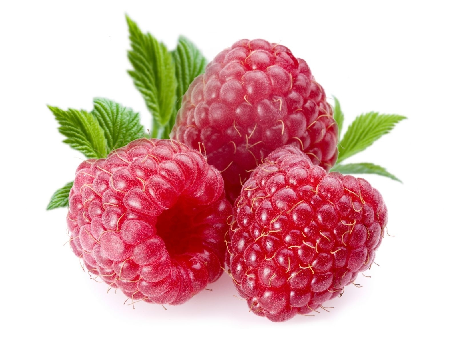 8518 download wallpaper Food, Raspberry, Berries screensavers and pictures for free