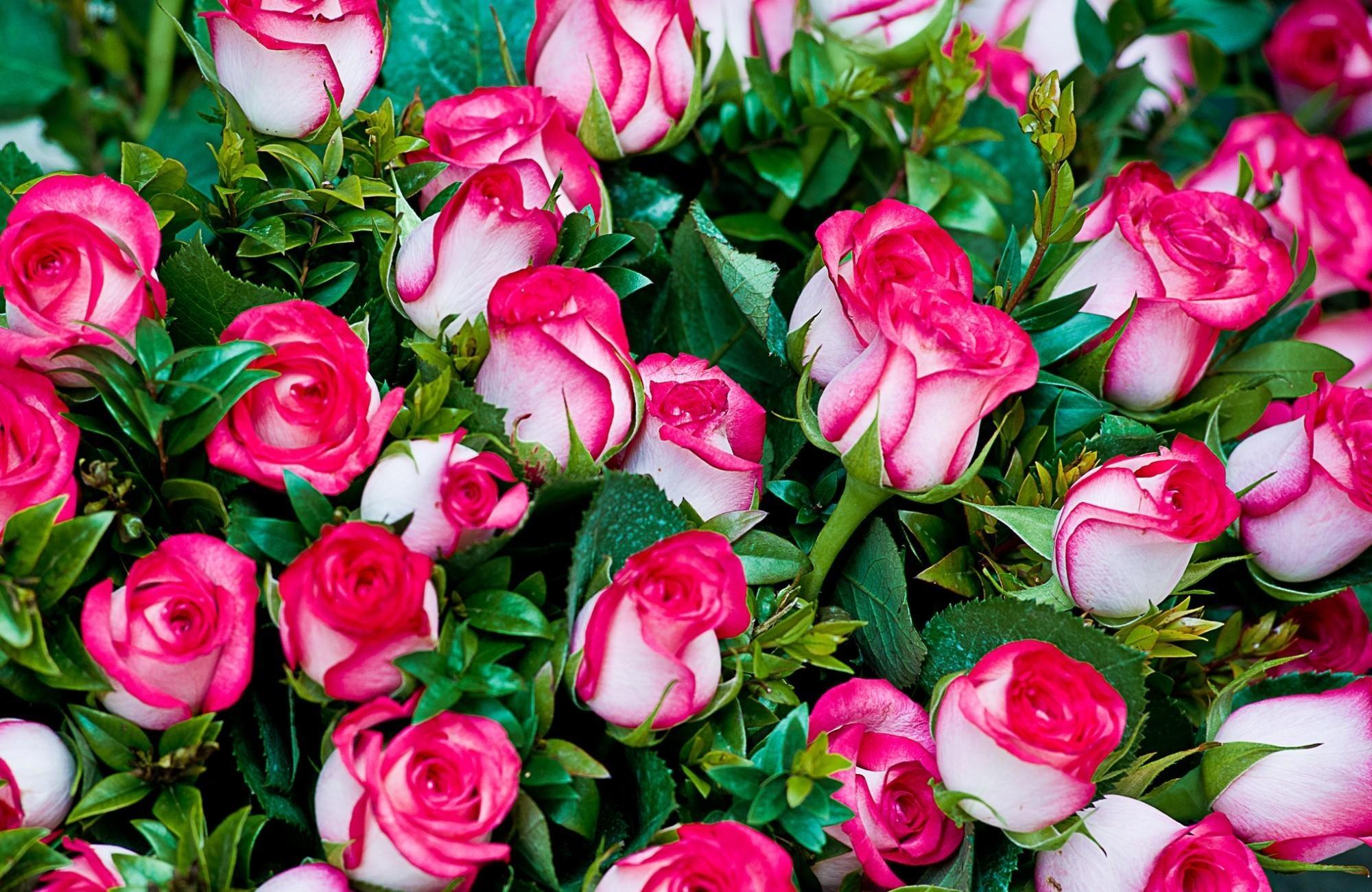 120032 скачать обои Розы, Букет, Цветы, Шикарно, Красиво - заставки и картинки бесплатно