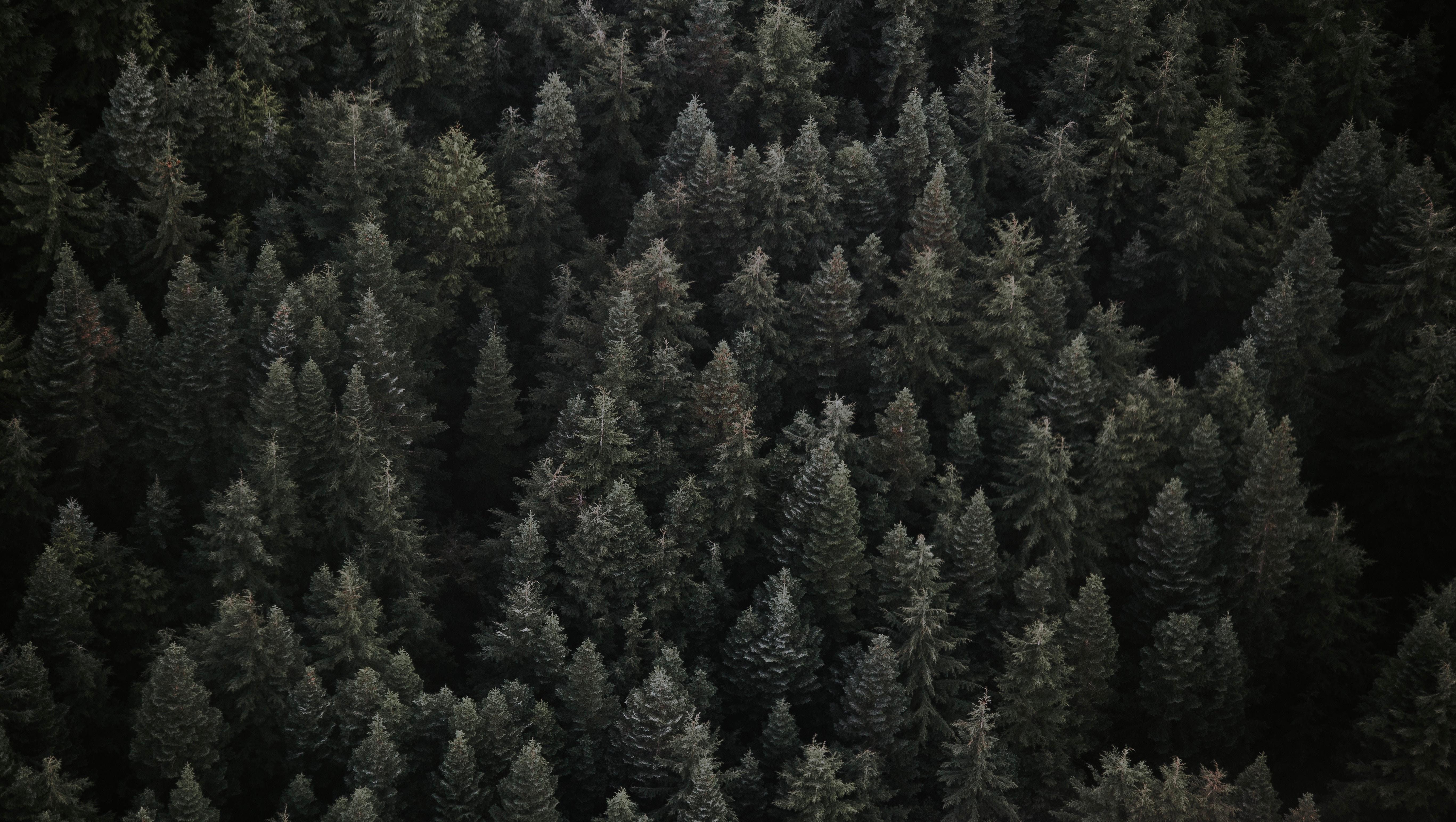 91685 papel de parede 1080x2400 em seu telefone gratuitamente, baixe imagens Natureza, Árvores, Vista De Cima, Ver De Cima, Floresta 1080x2400 em seu celular