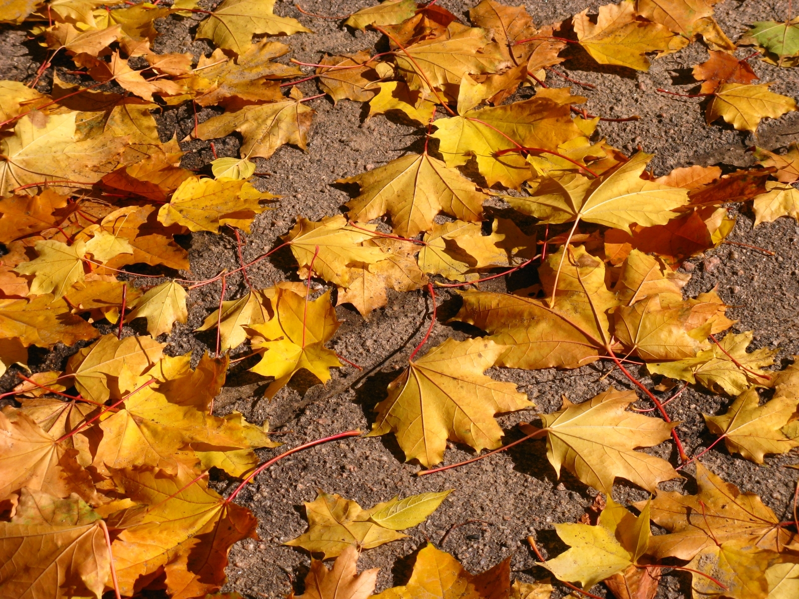 Download mobile wallpaper Leaves, Plants, Background for free.