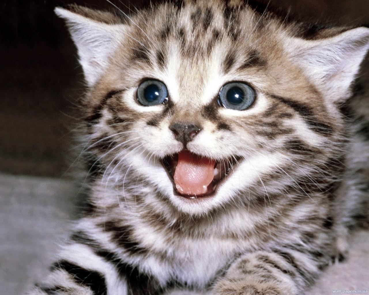 269 скачать обои Кошки (Коты, Котики), Животные - заставки и картинки бесплатно