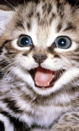 269 download wallpaper Animals, Cats screensavers and pictures for free