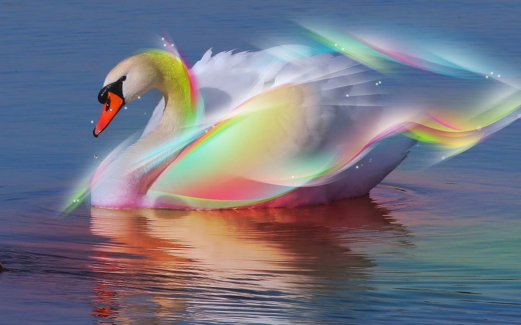 4367 download wallpaper Animals, Birds, Water, Swans screensavers and pictures for free