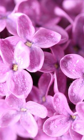 24550 скачать обои Растения, Цветы - заставки и картинки бесплатно