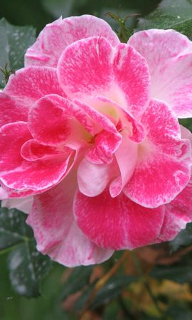 3480 descargar fondo de pantalla Plantas, Flores: protectores de pantalla e imágenes gratis