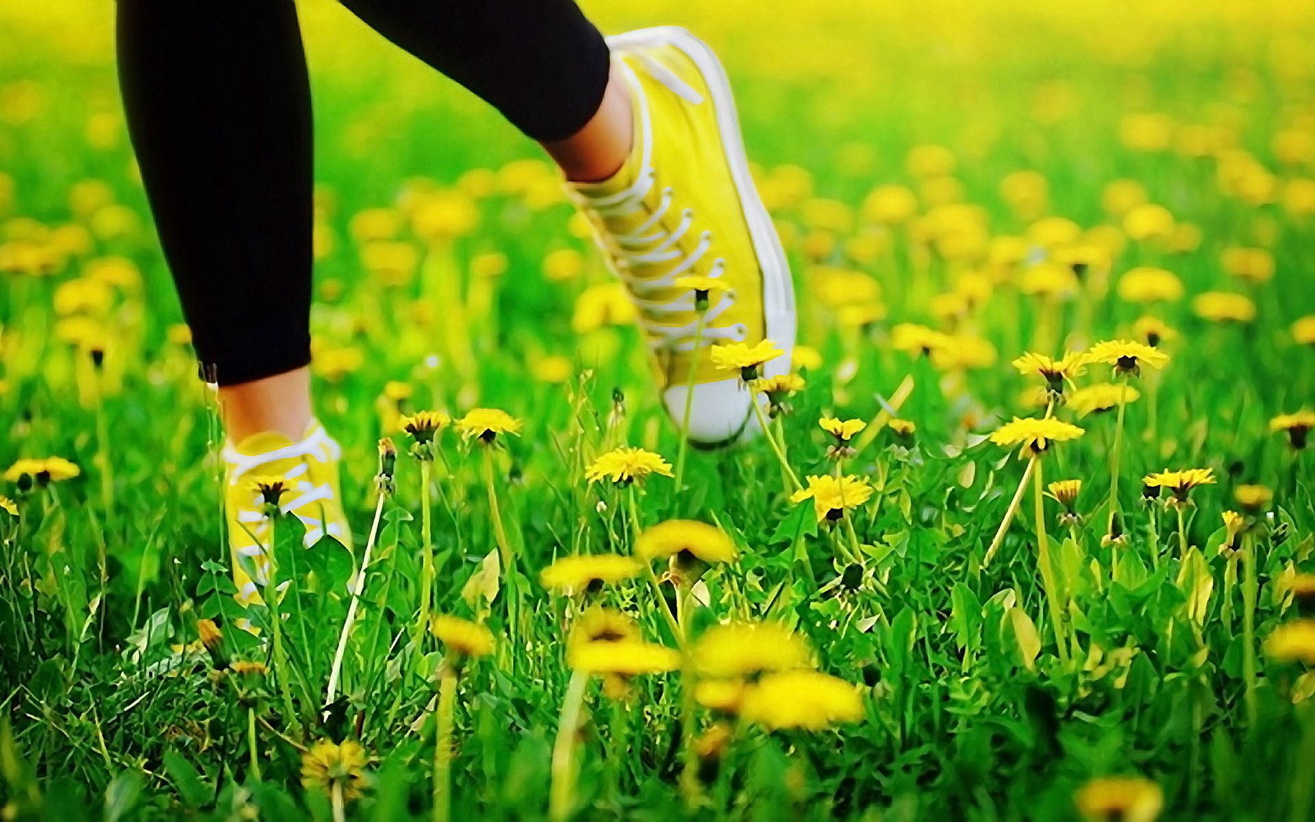 59071 download wallpaper Flowers, Grass, Dandelions, Miscellanea, Miscellaneous, Legs, Sneakers, Run Away, Run, Shoes screensavers and pictures for free