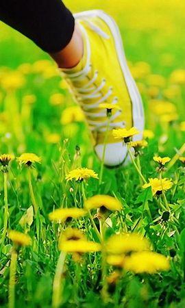 59071 скачать обои Разное, Ноги, Кеды, Трава, Бежать, Одуванчики, Цветы - заставки и картинки бесплатно