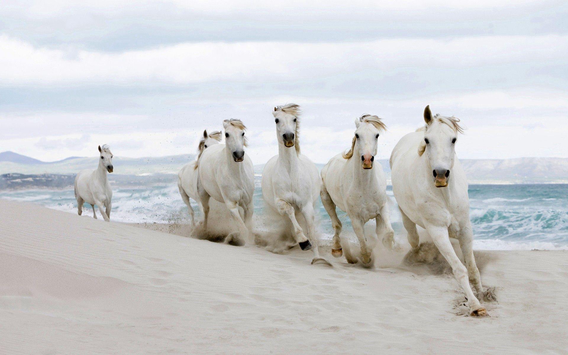 72376 download wallpaper Horses, Animals, Sand, Shore, Bank, Herd screensavers and pictures for free