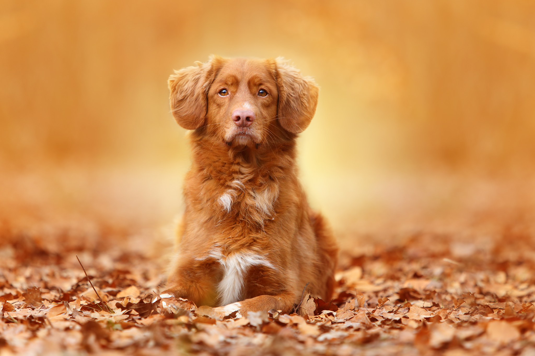 51527 Screensavers and Wallpapers Foliage for phone. Download Animals, Autumn, Dog, Foliage pictures for free